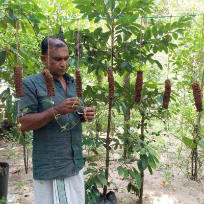 Kerala to implement herbal medicine buyback project